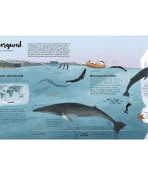 Little Gestalten. Die Welt der Wale by Darcy Dobell & Becky Thorns